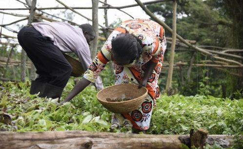 http://www.ipsnews.net/2017/01/farmer-field-schools-help-women-lead-on-climate-change/